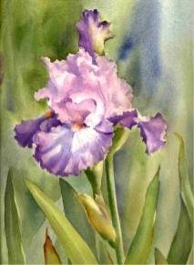 Painting Iris! DVD by Susie Short